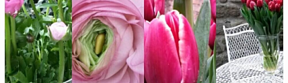 Tulipani Amore e tanta passione … una mattina all'Officina dei Fiori