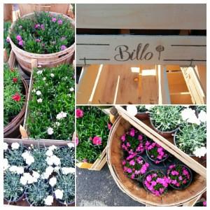 I Garofani - Floricultura Billo