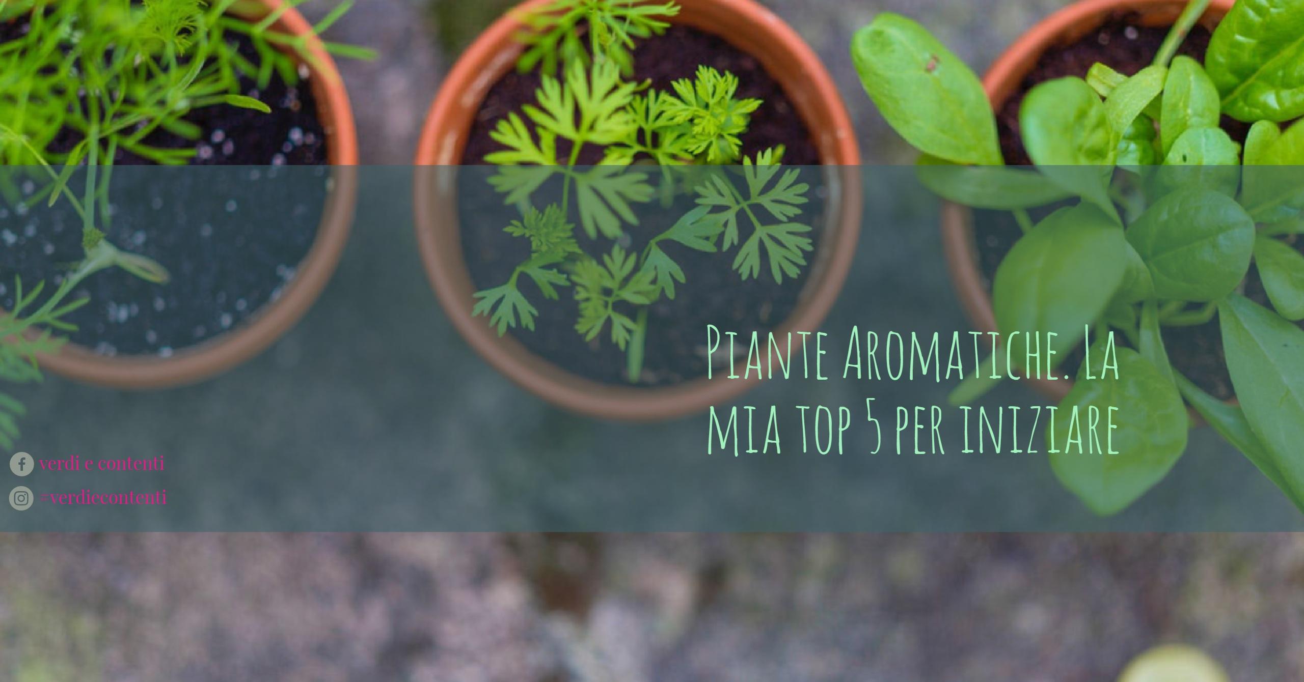 pollice verde: 5 piante aromatiche da non perdere!