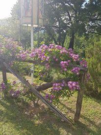 Il giardino segreto del Signor Paolo