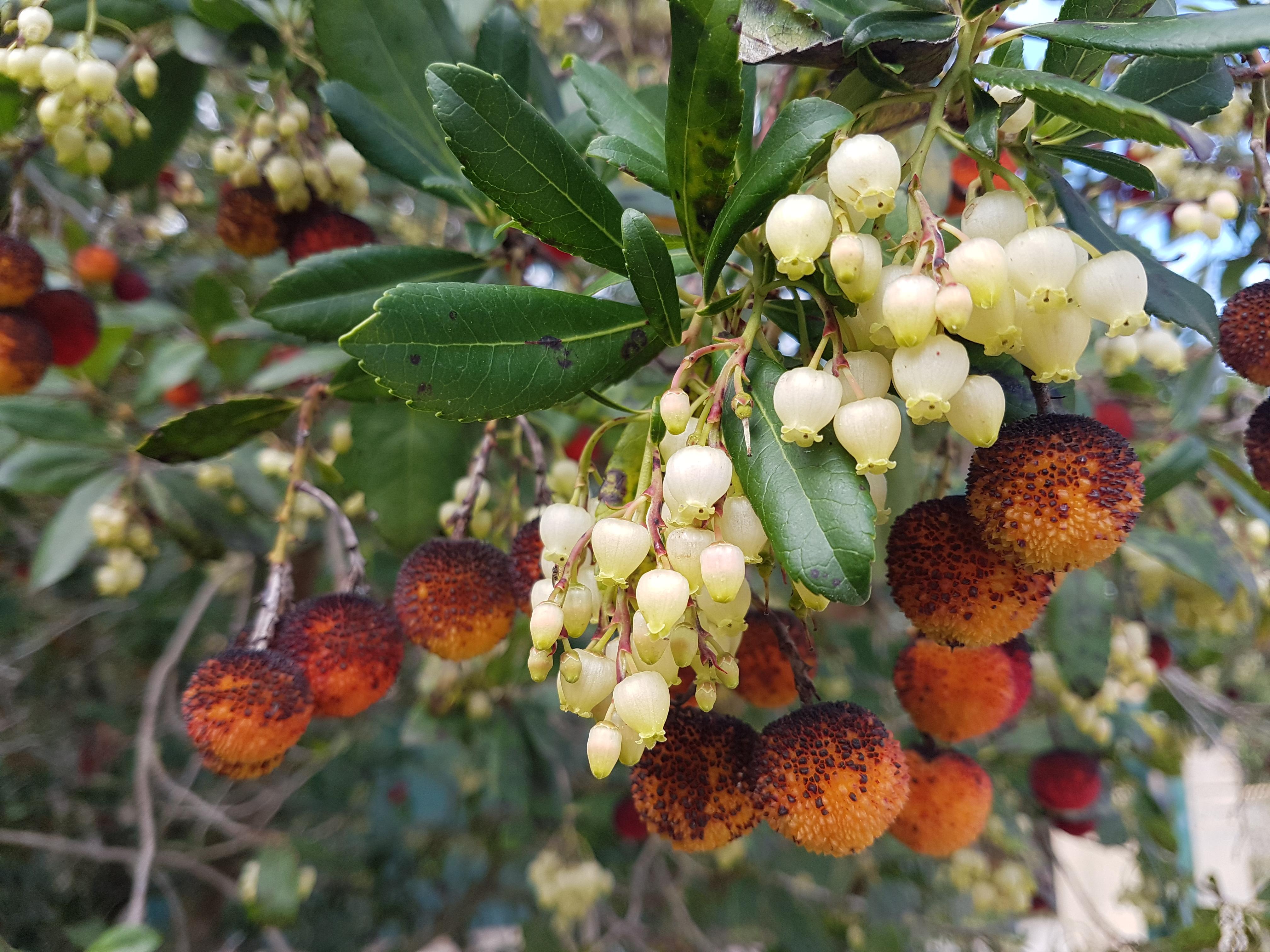 Balcone fiorito anche in autunno l 39 autunno e i suoi - Composizione giardino ...