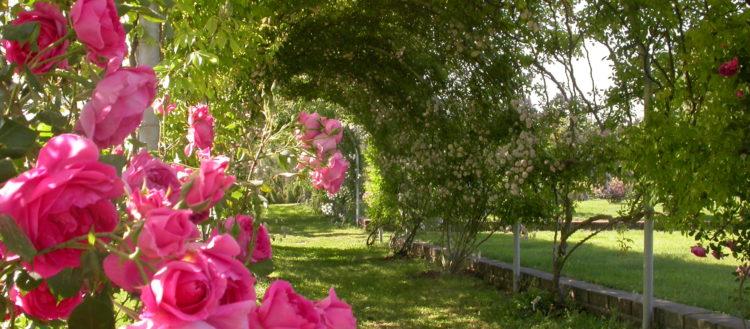 L'Orto Botanico di Viterbo