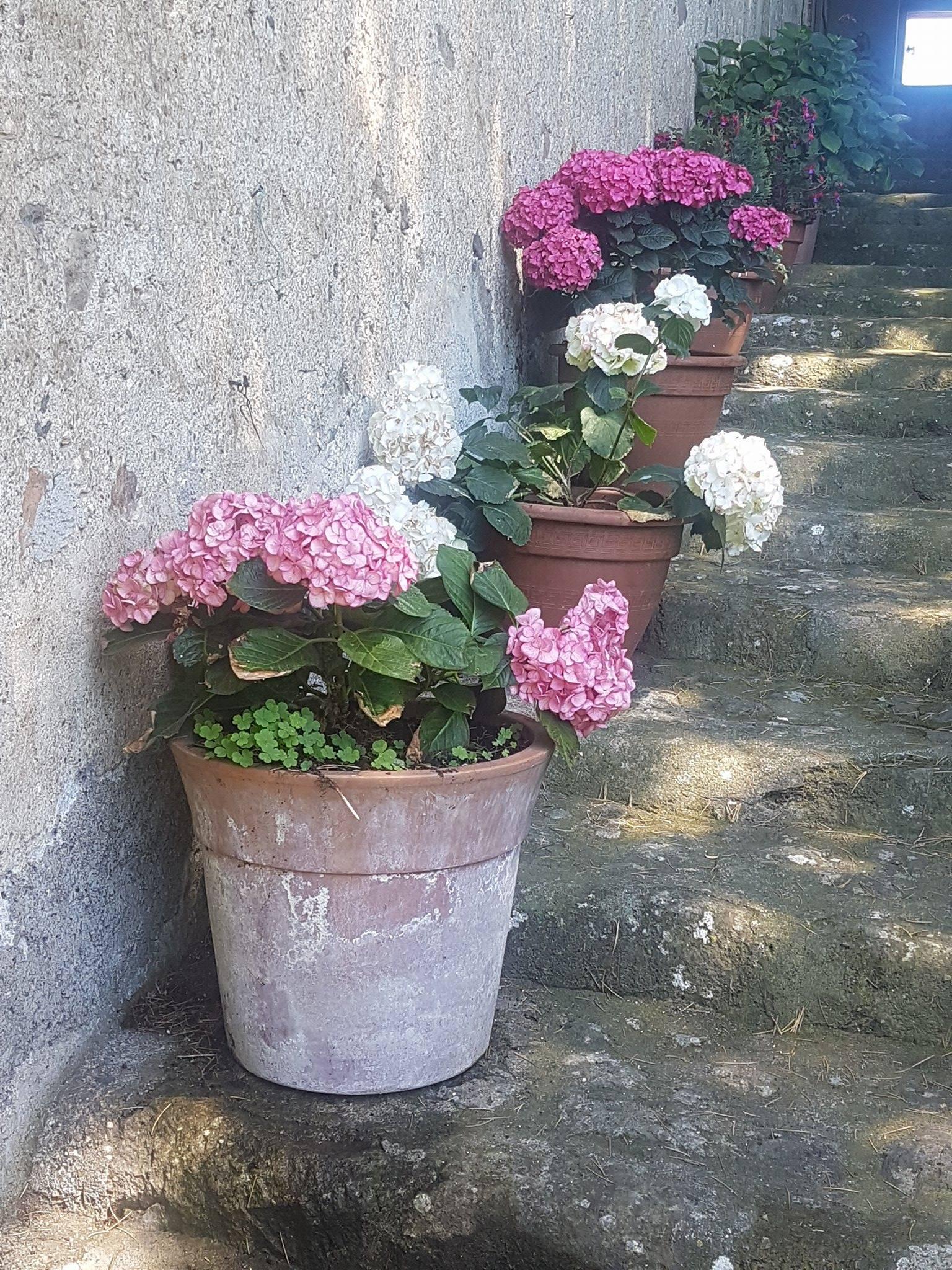 Vasi In Terracotta Per Giardino vasi: terracotta o plastica? vantaggi e svantaggi, quale