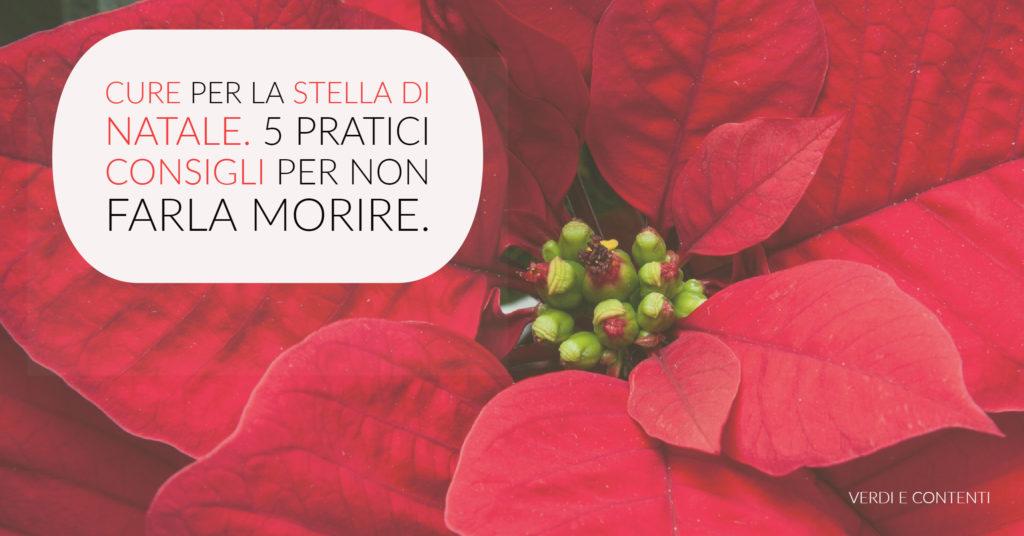 Stella Di Natale Come Curarla.Aansr7nrgxdlm