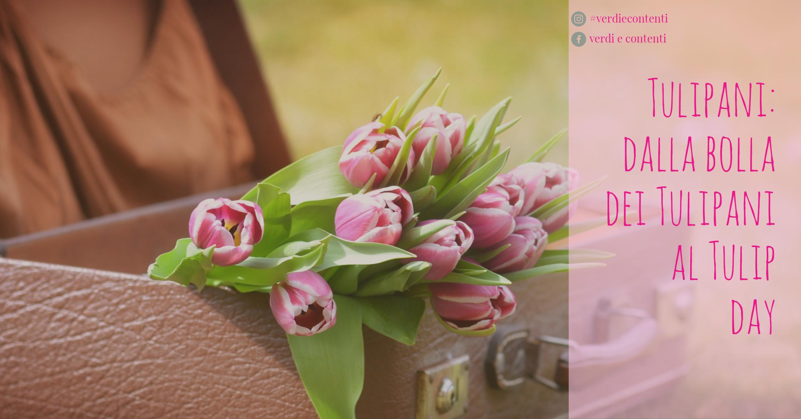 Tulipani: dalla bolla dei Tulipani al Tulip day