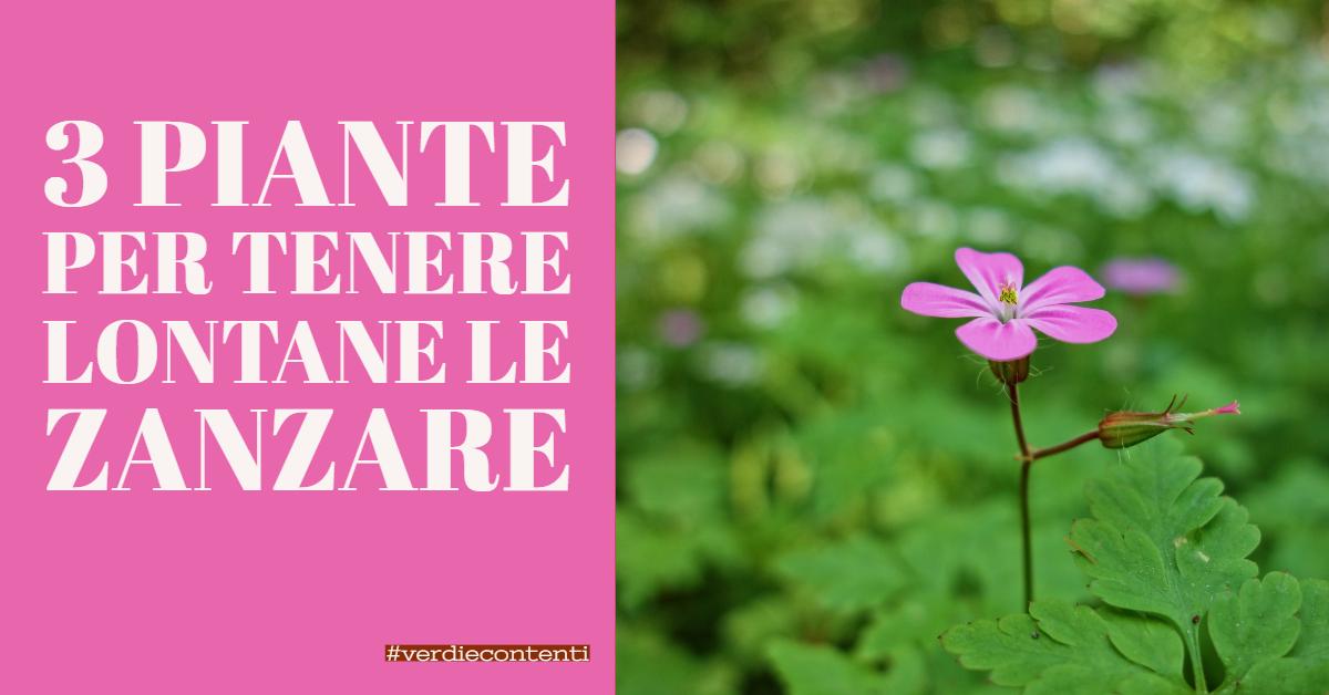 3 piante antizanzare da tenere in giardino o sul balcone