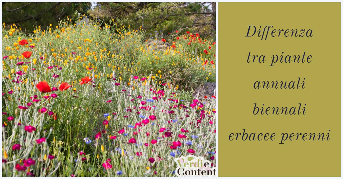 Differenza  tra piante annuali, biennali erbacee perenni