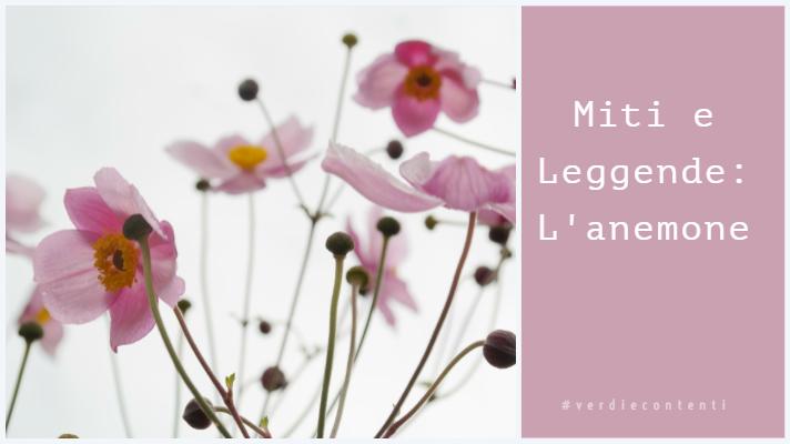 Miti e Leggende: L'anemone!