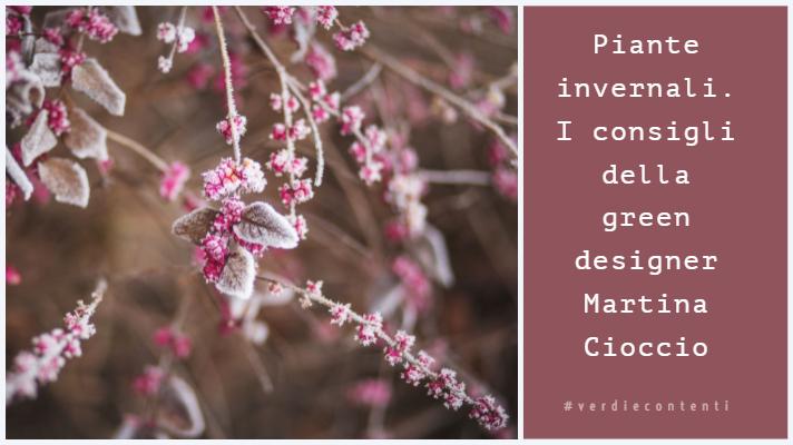 Piante invernali per colorare il tuo Giardino o Balcone.