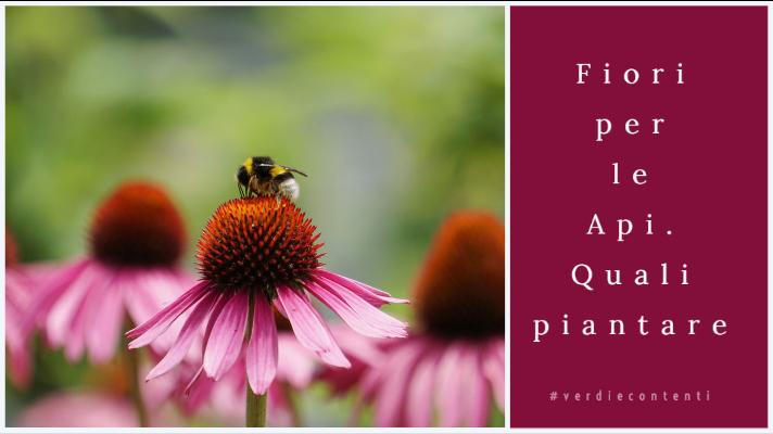 Per salvare le api piantiamo fiori per api!