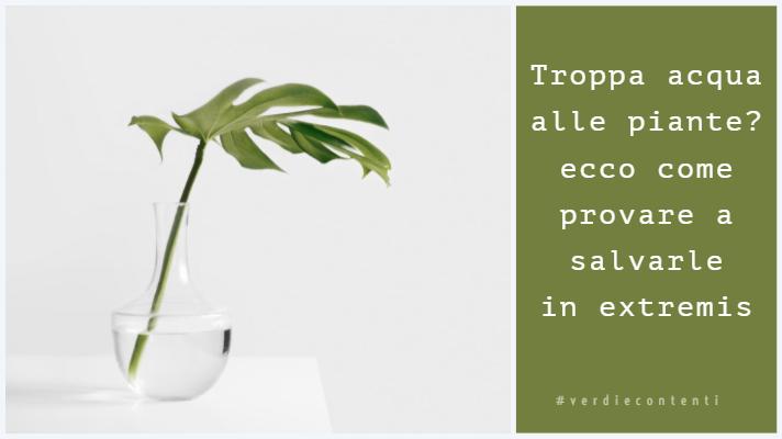 Troppa acqua alle piante? ecco come provare a salvarle in extremis!