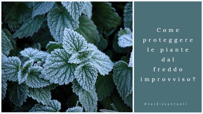 Come proteggere le piante dal freddo improvviso?
