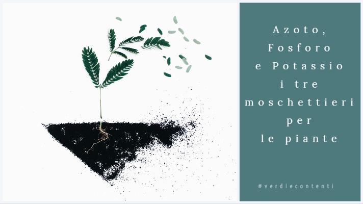 Azoto,Fosforo,Potassio i tre moschettieri per le piante.
