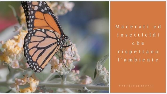 Macerati ed insetticidi che rispettano l'ambiente