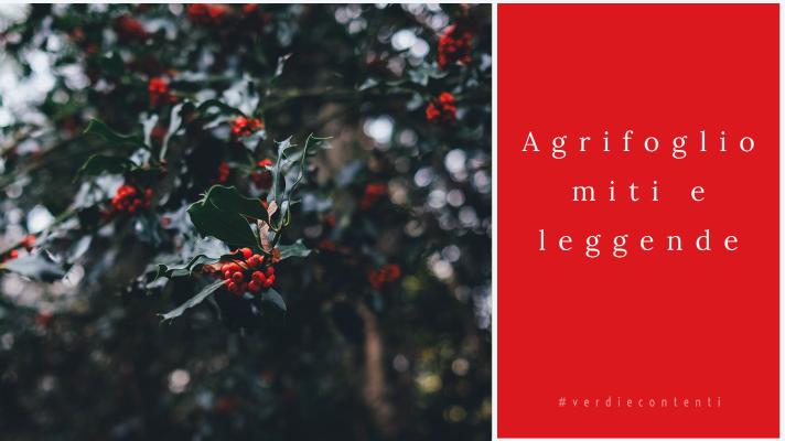 Agrifoglio miti e leggende di una delle piante simbolo del Natale