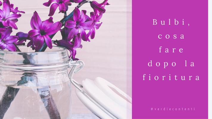 Bulbi,cosa fare dopo la fioritura