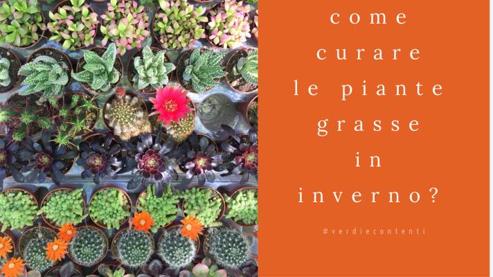 Come Curare le piante grasse in autunno/inverno?
