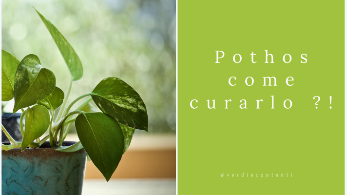 Pothos…come curarlo?